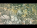Съемка рыбок под водой в р.Мораче Черногория на samsung galaxy s4 active